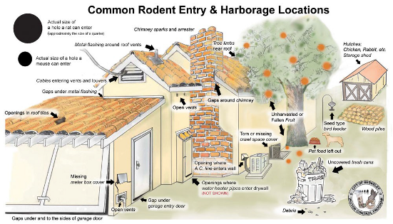 Common Rodent Entry and Harborage Locations